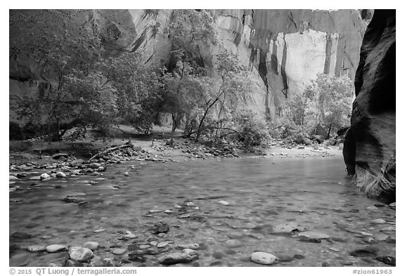 Virgin River and trees in early summer. Zion National Park (black and white)