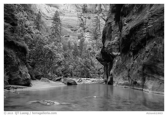 Wide portion of the Narrows with pocket of forest. Zion National Park (black and white)