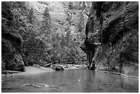 Wide portion of the Narrows with pocket of forest. Zion National Park ( black and white)