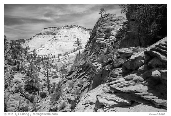 Slickrock landscape, East Zion. Zion National Park (black and white)