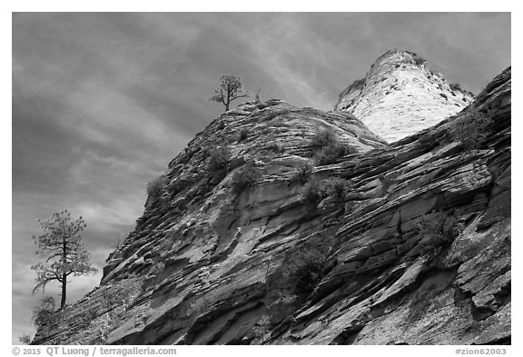 Trees, red and white cliffs, East Zion. Zion National Park (black and white)