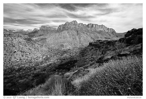 North Fork. Zion National Park (black and white)