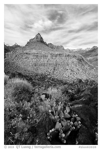 Cactus and North Fork. Zion National Park (black and white)