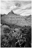Cactus and North Fork. Zion National Park ( black and white)