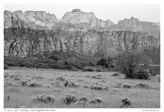 Tall grasses and rock towers, Kolob Terraces. Zion National Park (black and white)