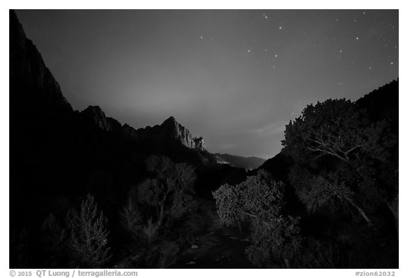 Trees and Watchman at night. Zion National Park (black and white)