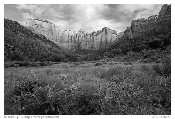 Summer wildflowers and Towers of the Virgin. Zion National Park (black and white)