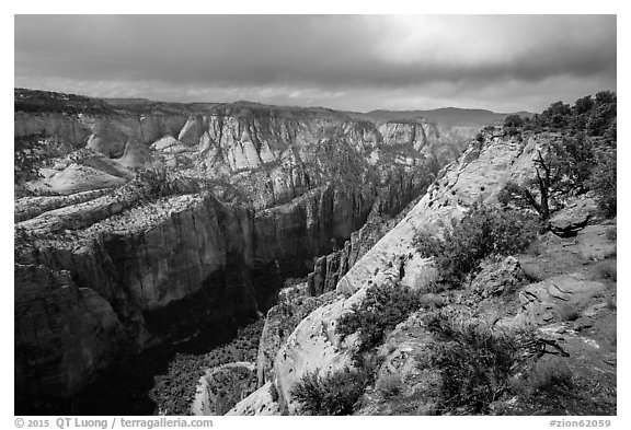 North Zion Canyon from above, Observation Point. Zion National Park (black and white)