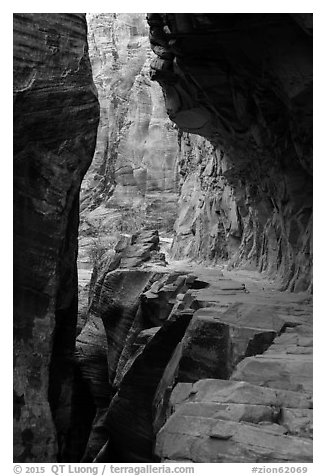 Trail cut into Echo Canyon. Zion National Park (black and white)