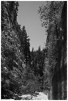 At the base of tall cliffs in Orderville Canyon. Zion National Park ( black and white)