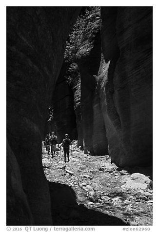 Hiking in narrow dry gorge, Orderville Canyon. Zion National Park (black and white)