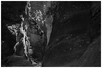 Shadows and light, Orderville Canyon. Zion National Park ( black and white)
