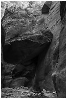 Tree growing on large jammed boulder, Orderville Canyon. Zion National Park ( black and white)