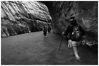 Hikers in Virgin River narrows passage without riverbank. Zion National Park ( black and white)