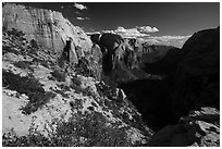 Wildflowers and Zion Canyon from Angels Landing. Zion National Park ( black and white)