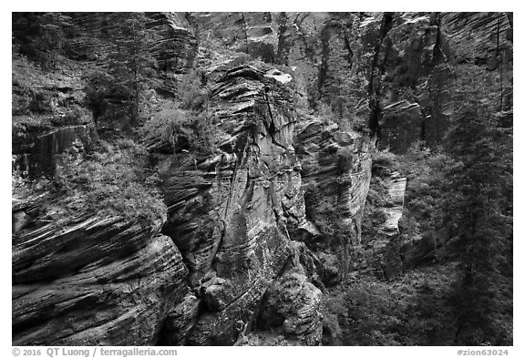 Refrigerator Canyon. Zion National Park (black and white)