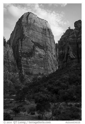 Great White Throne, late afternoon. Zion National Park (black and white)