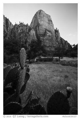 Cactus and Great White Throne. Zion National Park (black and white)