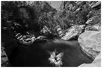 Swimming hole, Pine Creek. Zion National Park ( black and white)