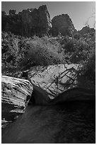 Man jumps from rock into water, Pine Creek. Zion National Park ( black and white)