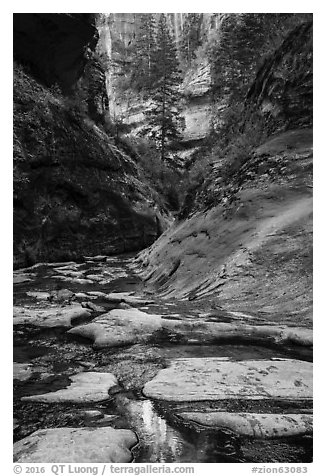 Stream and canyon walls, Left Fork. Zion National Park (black and white)
