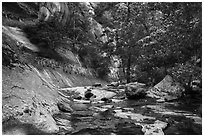 Lush oasis along Left Fork. Zion National Park ( black and white)