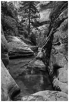 Emerald pools along Left Fork. Zion National Park ( black and white)