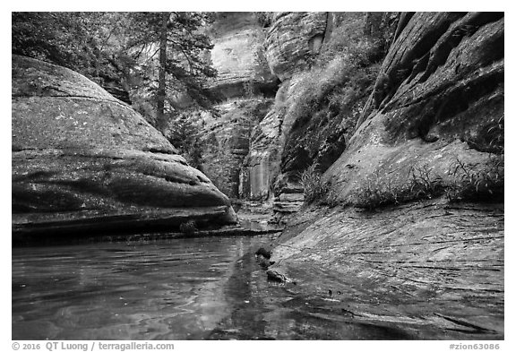 Emerald stream and lush vegetation along Left Fork. Zion National Park (black and white)