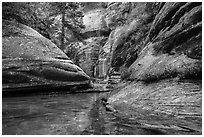 Emerald stream and lush vegetation along Left Fork. Zion National Park ( black and white)
