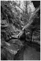 Clear waters and canyon walls along Left Fork. Zion National Park ( black and white)