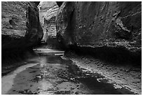 Left Fork flows in Upper Subway. Zion National Park ( black and white)