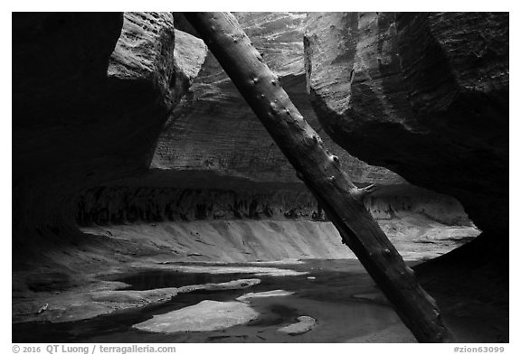 Log called North Pole and canyon chamber, Upper Subway. Zion National Park (black and white)