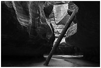 North Pole log. Zion National Park ( black and white)