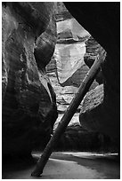 North Pole log in the Upper Subway. Zion National Park ( black and white)