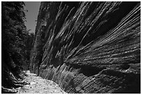 Open section with tall walls, Orderville Canyon. Zion National Park ( black and white)