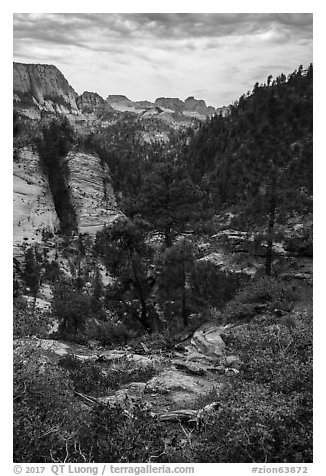 Russell Gulch. Zion National Park (black and white)