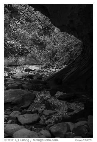 Pool and vegetation from alcove, Upper Left Fork. Zion National Park (black and white)