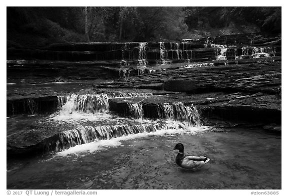 Duck and Archangel Falls. Zion National Park (black and white)