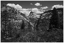 Zion Canyon rim view with vegetation and white cliffs. Zion National Park ( black and white)