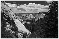 Lower Telephone Canyon. Zion National Park ( black and white)