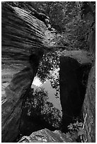 Pool, Upper Behunin Canyon. Zion National Park ( black and white)