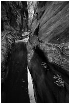 Ferns and pool in narrows, Behunin Canyon. Zion National Park ( black and white)