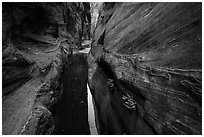 Moist environment in narrows, Behunin Canyon. Zion National Park ( black and white)