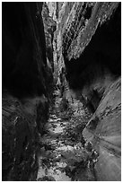 Tight narrows with ferns, Behunin Canyon. Zion National Park ( black and white)