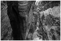 Narrows from above, Behunin Canyon. Zion National Park ( black and white)