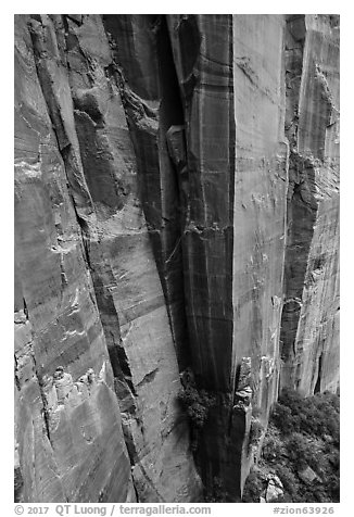 Sandstone cliffs. Zion National Park (black and white)