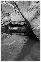 Reflections, Upper Emerald Pool. Zion National Park ( black and white)