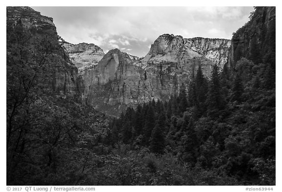 Upper Emerald Pool greenery frames Zion Canyon. Zion National Park (black and white)