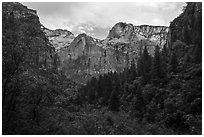 Upper Emerald Pool greenery frames Zion Canyon. Zion National Park ( black and white)