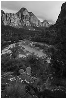 Cactus, Virgin River, and Zion Canyon. Zion National Park ( black and white)